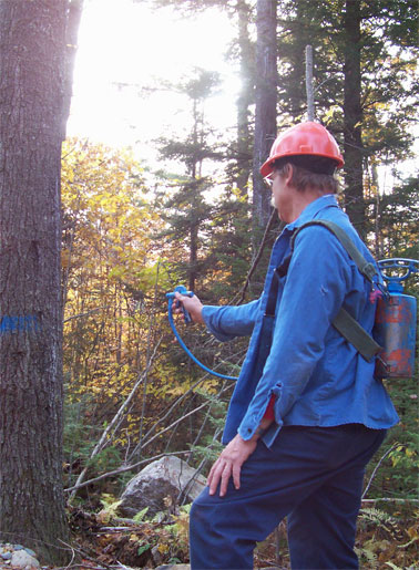 david painting trees